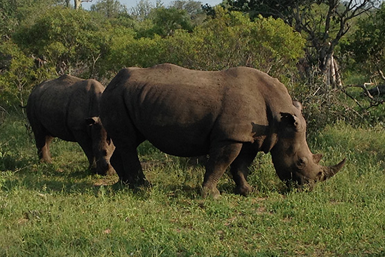 Bush0_Rhino2